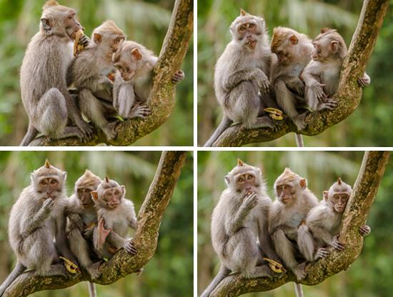 Beberapa seri foto Monkey Forest