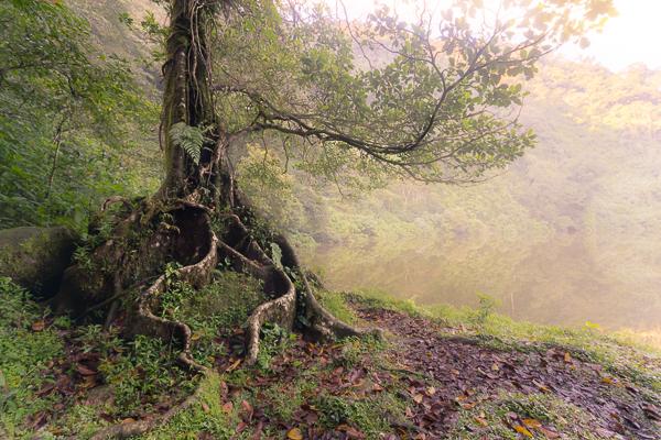 Bahas-foto-mystic-tree