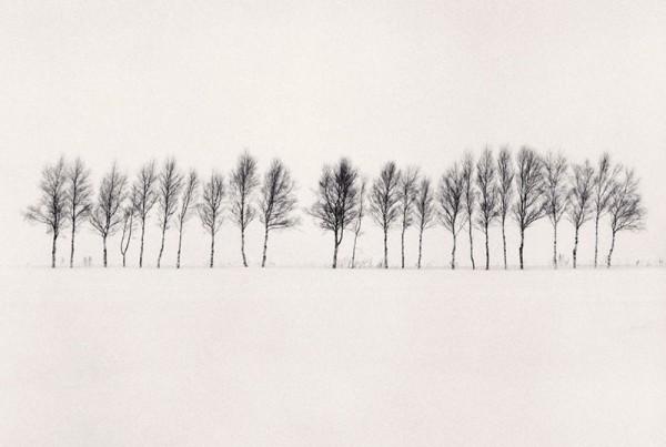 24-abashiri-trees