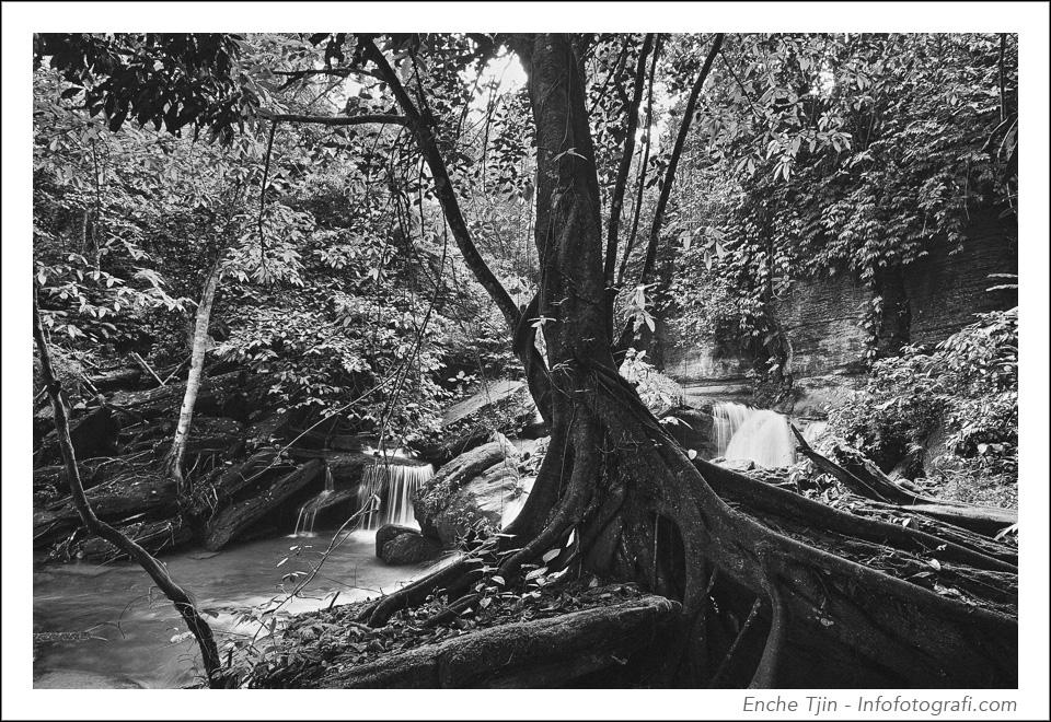 river-forest-bw