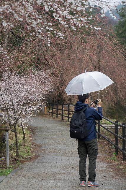 enche-tjin-tas-kata-sakura-2