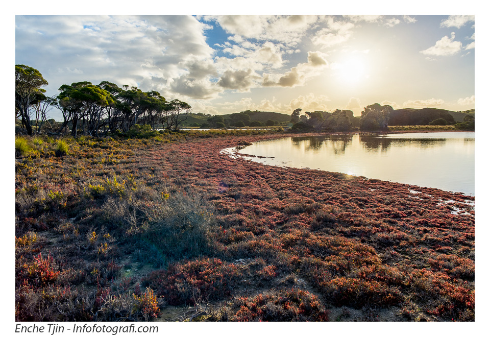 rottnest-red-beach