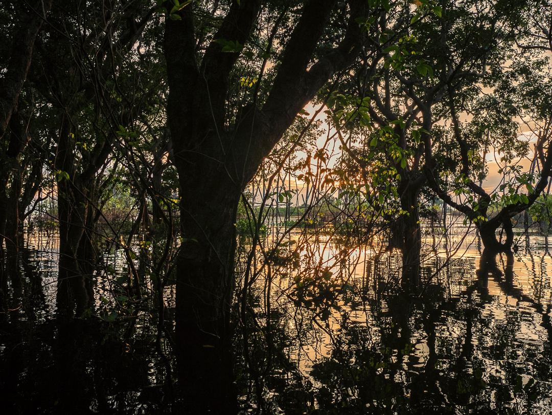 Pemandangan sunset di hutan bakau di atas perahu