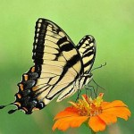 butterfly-macro-photography