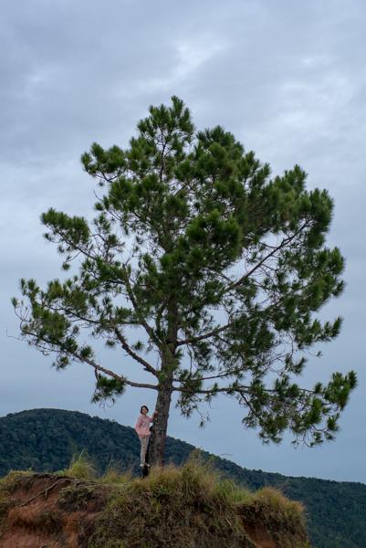 lonely tree di taman Simalem