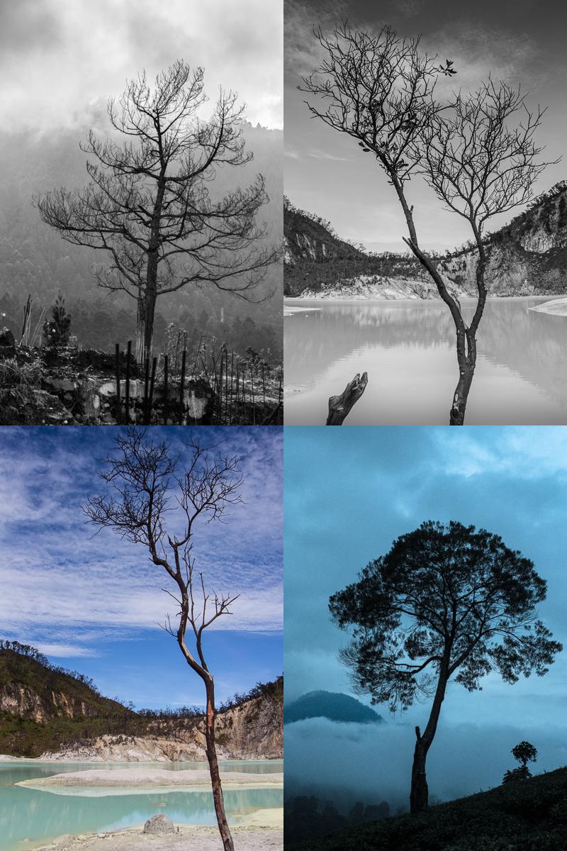 pohon-2-iesan