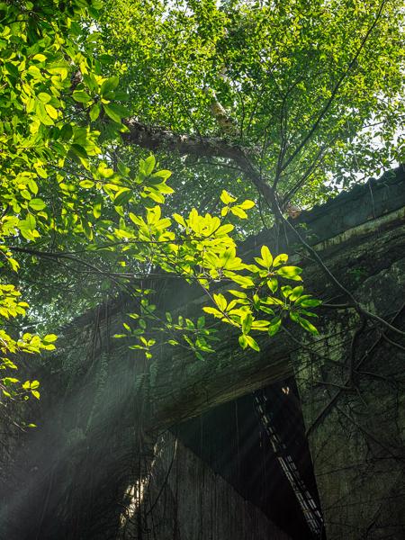 Saat mengadakan workshop portrait model, saya melihat keatas ada Ray of light yang menembus daun pohon yang membentuk garis diagonal yang menarik perhatian saya dan peserta workshop lainnya.