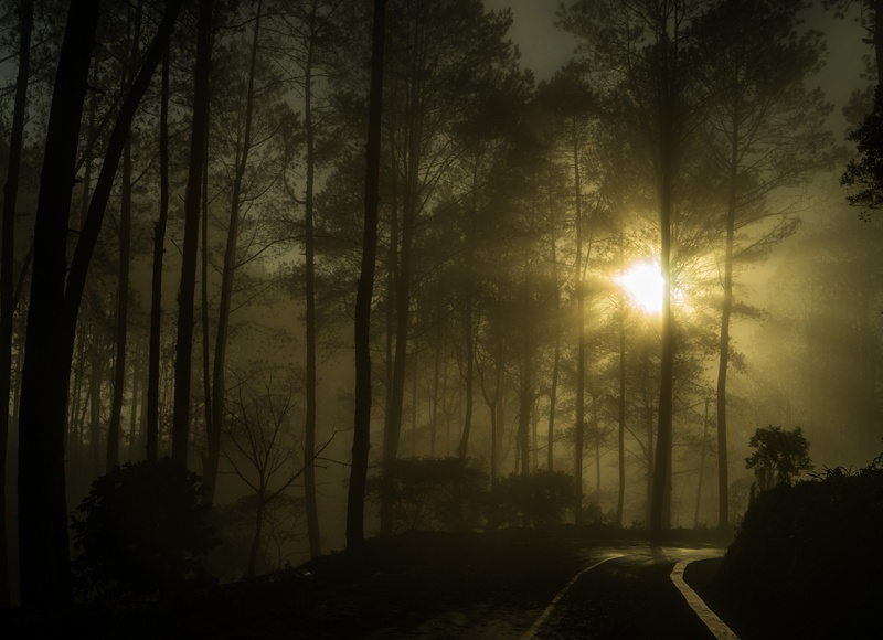 Matahari terbit diantara pohon pinus