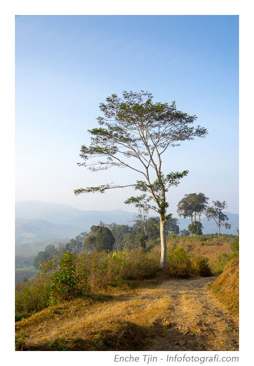 pangalengan-pohon