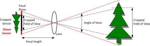 LensCropFactor